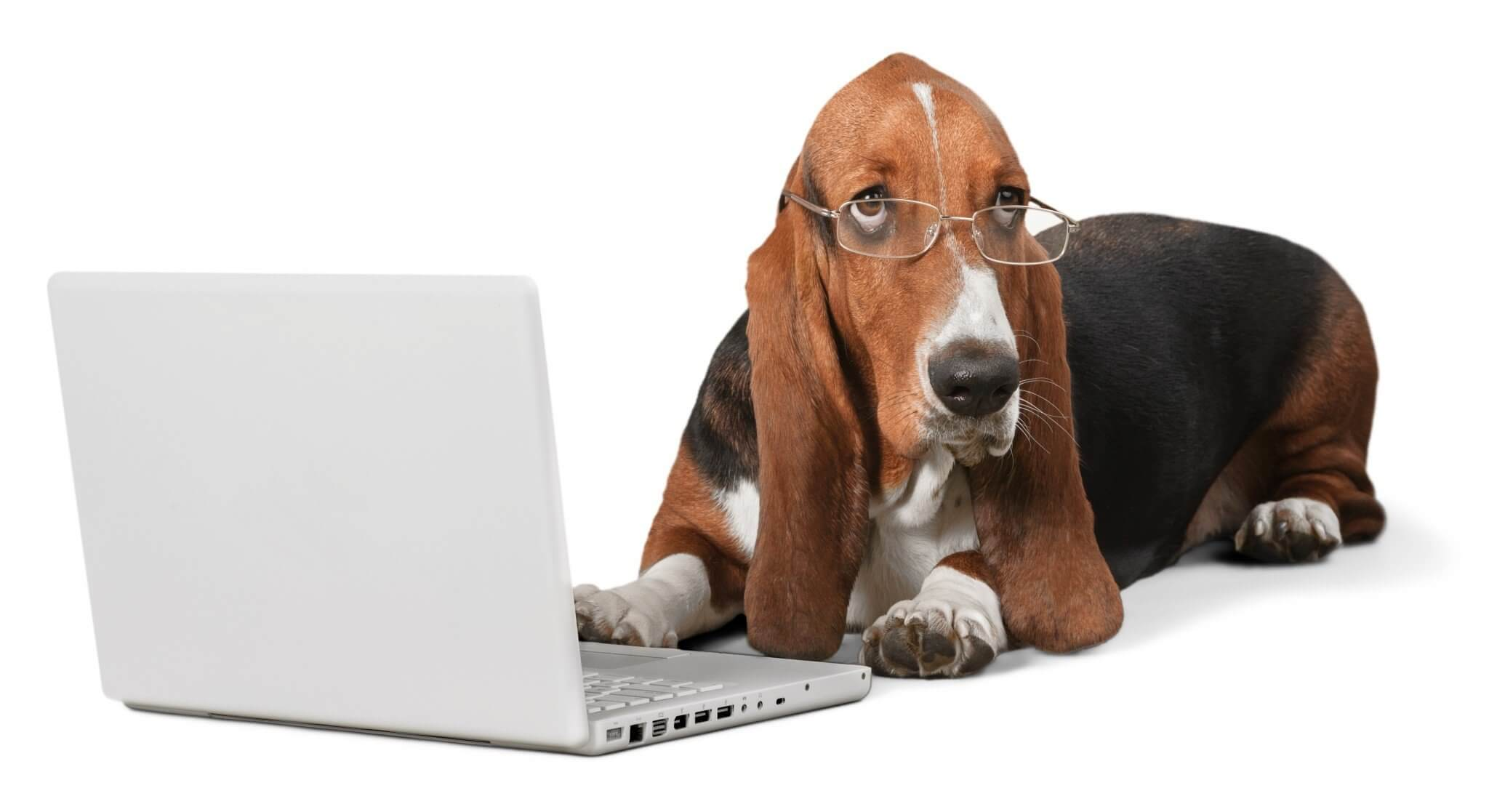 OfficeHound with laptop working on white label social media